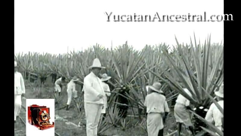 Hacendado Yucateco Henequén